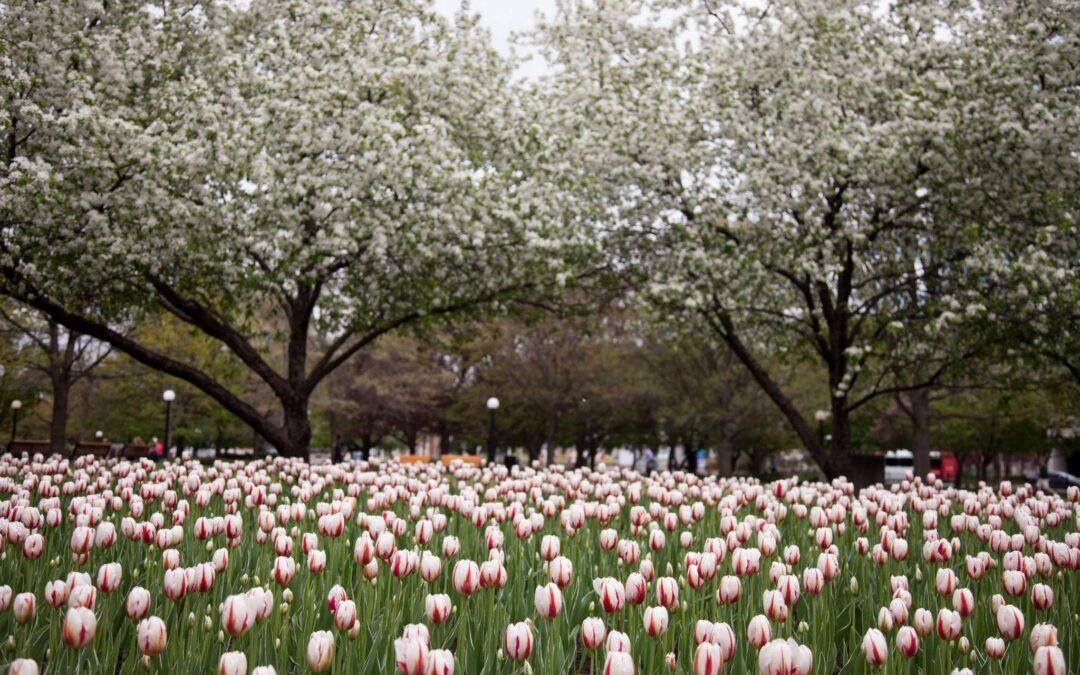 Confederation Park Gardens