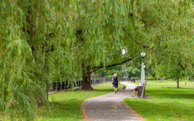 Patterson Creek Park